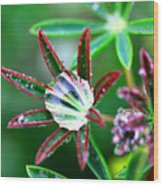 Starry Droplets Wood Print