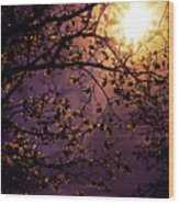 Stars In An Earthly Sky Wood Print by Vivienne Gucwa