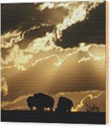 Stately American Bison Wood Print
