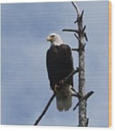 Stately Eagle Wood Print