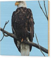 Stately Eagle Wood Print