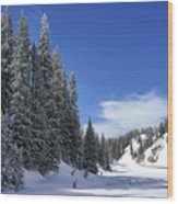 Stately Pines Wood Print