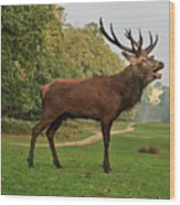 Stately Stag Wood Print