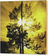 Steam And Tree With Sunlight Rays Blue Sky Wood Print