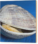 Steamed Clam Wood Print by Frank Tschakert