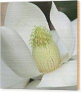 Steel Magnolia 33 Wood Print