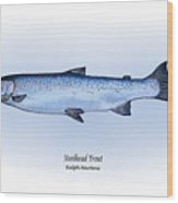 Steelhead Trout Wood Print by Ralph Martens