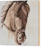 Steely Black Stallion Wood Print