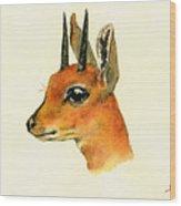 Steenbok Wood Print