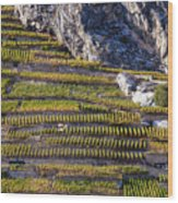 Steep Slope Viticulture In Valais Canton Wood Print