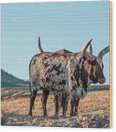 Steers In The Desert Wood Print
