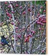 Stellar Jay In Crab Apples Wood Print