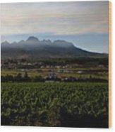 Stellenbosch Vineyard Wood Print