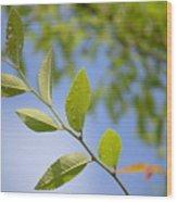 Stem Wood Print
