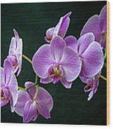 Stem Of Orchids  Wood Print