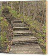 Step Trail In Woods 17 B Wood Print