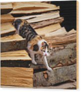 Stepping Down - Calico Cat On Beech Woodpile Wood Print