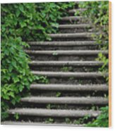 Steps With Ivy Wood Print