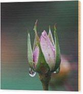 Sterling Rose Wood Print