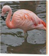 Stern Flamingo Wood Print