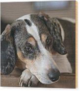 Stewie - Family Dog Wood Print