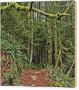Sticking Out In The Rain Forest Wood Print
