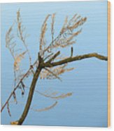 Sticks Wood Print
