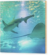 Sting Ray And Shark Wood Print