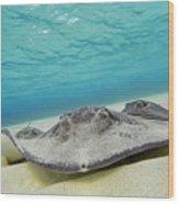 Stingrays Under Water Wood Print