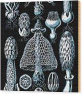 Stinkhorn Mushrooms Vintage Illustration Wood Print