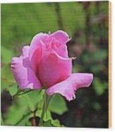 Stolen Grace Wood Print