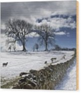 Stone Fence, Weardale, County Durham Wood Print