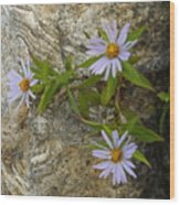 Stone Flowers Blue Wood Print