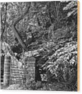 Stone Stairway Along The Wissahickon Creek In Black And White Wood Print