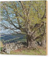 Stone Wall Spring Landscape Wood Print