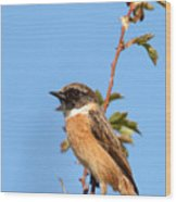 Stonechat On Branch Wood Print