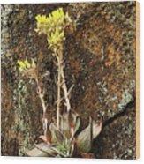Stonecrop Wood Print
