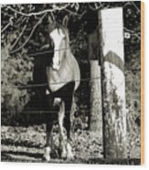 Stopping For A Pose - Southern Indiana Wood Print