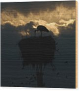 Stork With Evening Sun Light  Wood Print