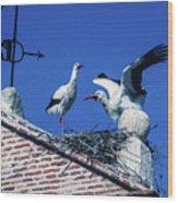 Storks Of Segovia Wood Print