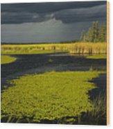 Storm Light At Patten Lake #2 Wood Print
