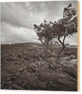 Storm Moving In - Sepia Wood Print
