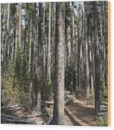 Storm Point Trail Forest Wood Print