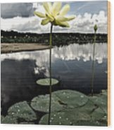 Stormy Lotus Wood Print