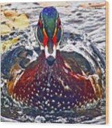 Straight Ahead Wood Duck Wood Print