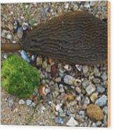 Stranded Kelp Wood Print