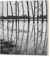 Stranded Trees II Wood Print