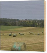 Straw Dries In A Farmers Field Wood Print
