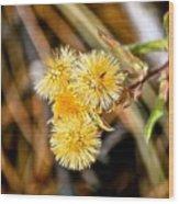 Straw Flowers Wood Print