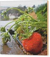 Strawberries And Rain Wood Print